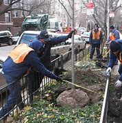 city of chicago tree removal